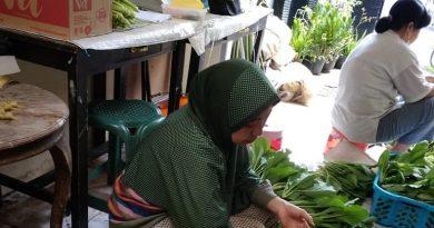 KWT Cemara Hijau Farm Tetap Produktif Hasilkan Sayur Organik