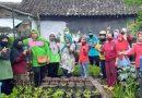 Kunjungan TP PKK Pokja 3 Kecamatan Sukun ke Urban Farming Gladiol